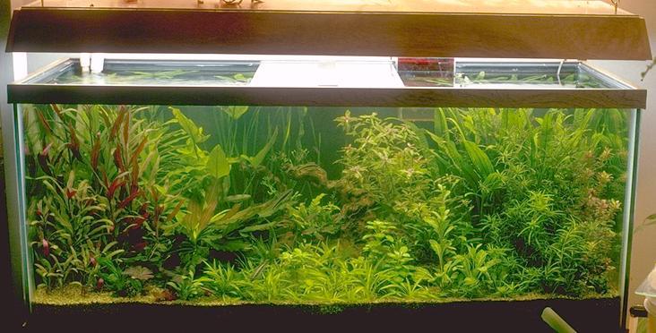 fish tank plants. Thar Darn Plant Tank: Plants